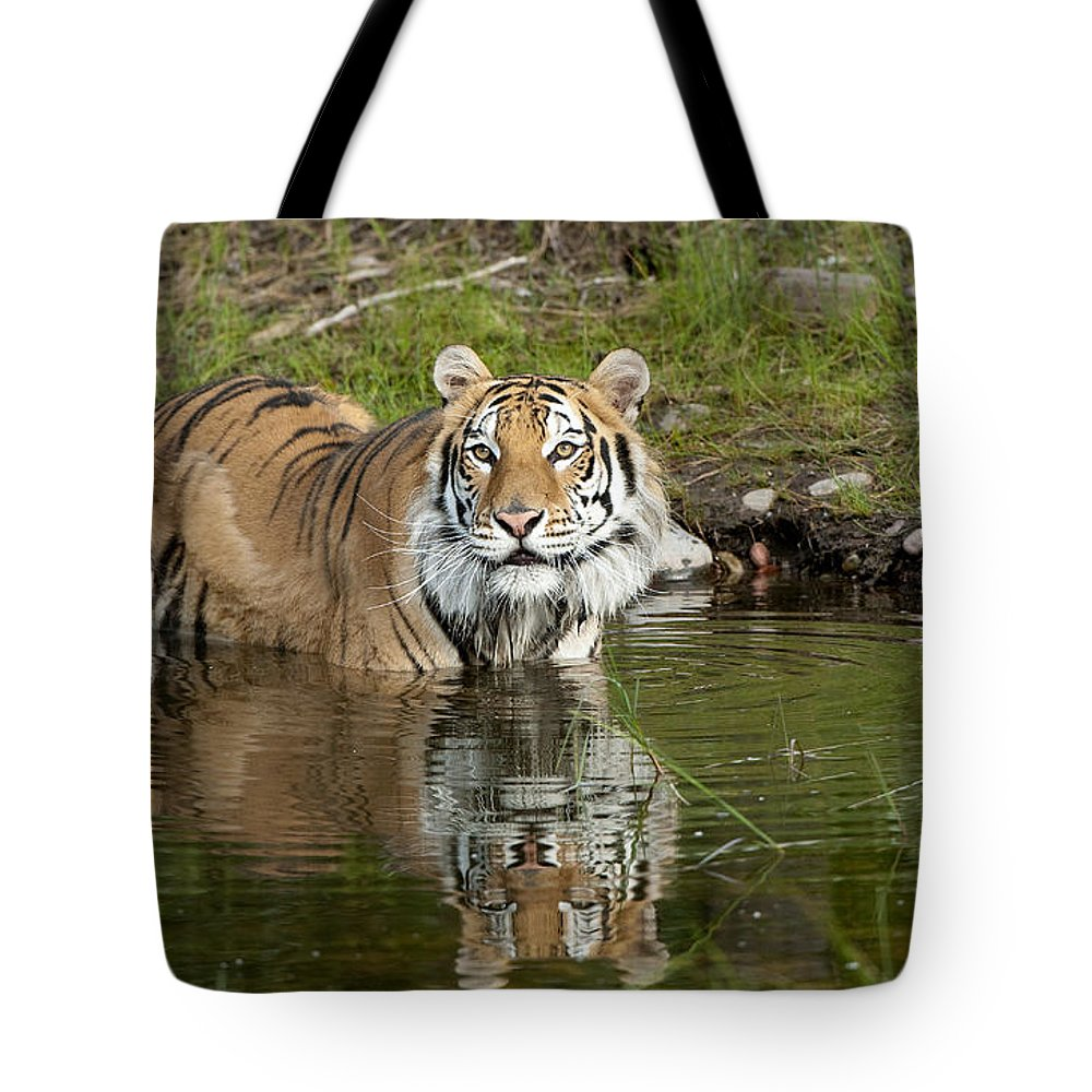 Sandra Bronstein Tote Bag featuring the photograph Cooling Off by Sandra Bronstein