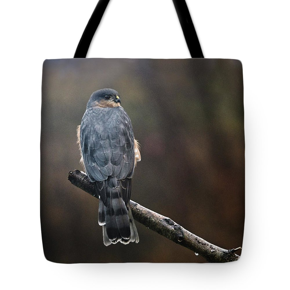Hawk Tote Bag featuring the photograph Coopers Hawk by Susan Capuano