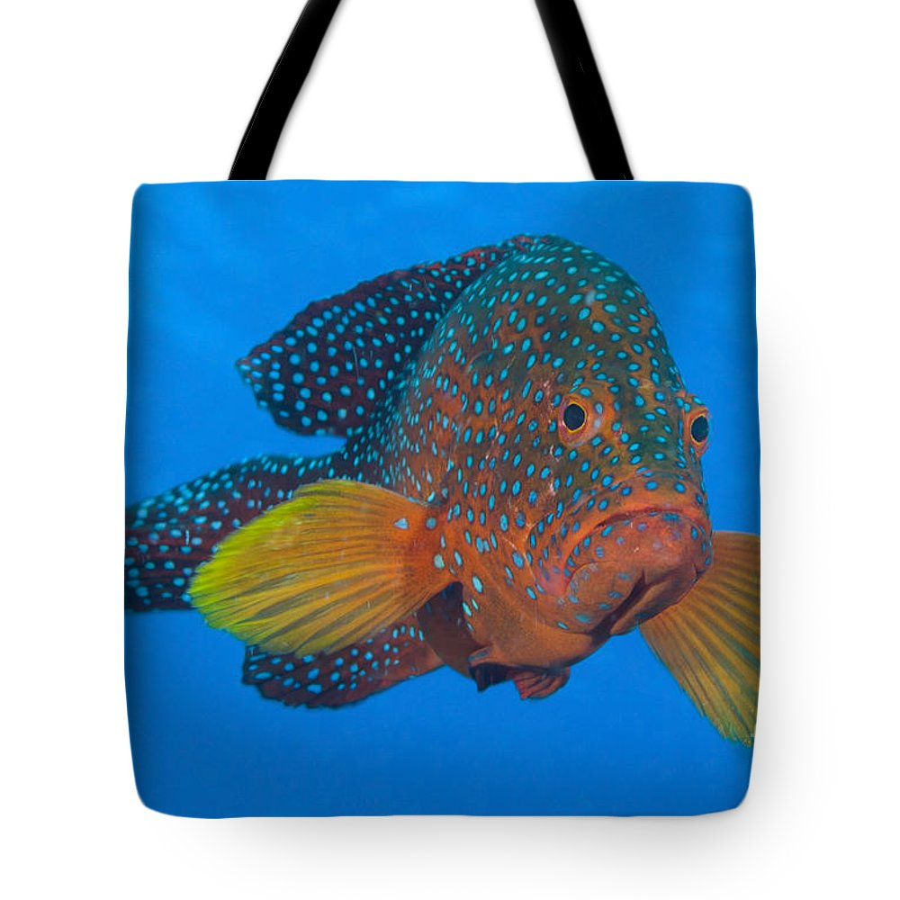 Osteichthyes Tote Bag featuring the photograph Coral Grouper, Kimbe Bay, Papua New by Steve Jones