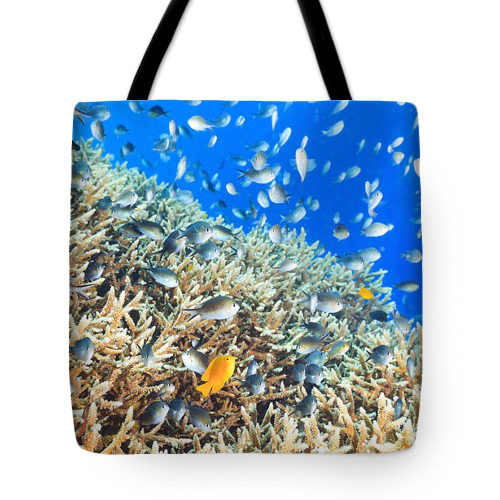 Underwater Tote Bag featuring the photograph Coral Reef Panorama by MotHaiBaPhoto Prints