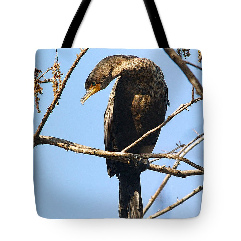 Bird Tote Bag featuring the photograph Cormorant Portrait by Roy Williams