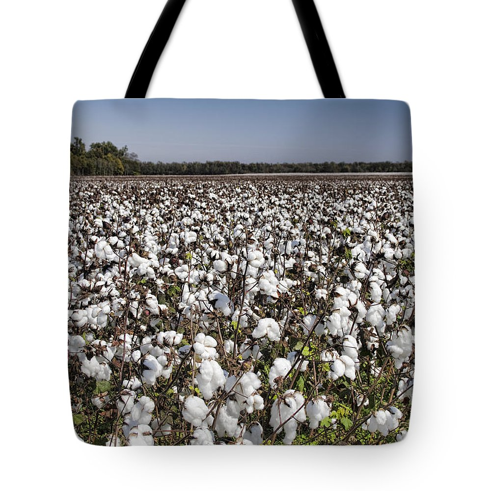 Cotton Tote Bag featuring the photograph Cotton In Limestone County by Kathy Clark