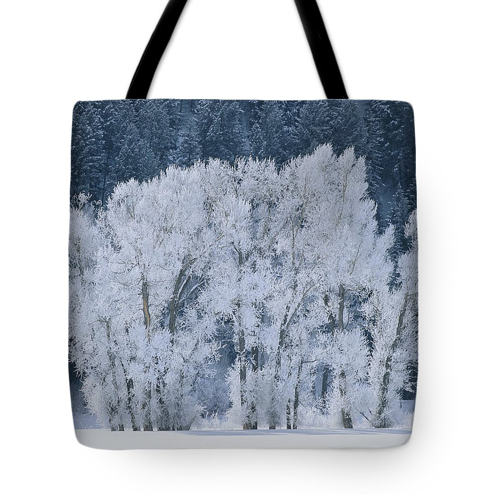 Natural Forces And Phenomena Tote Bag featuring the photograph Cottonwood Trees With Frost by Skip Brown