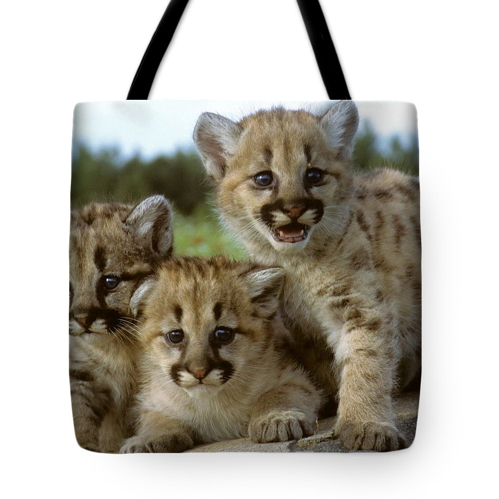 Cougar Tote Bag featuring the photograph Cougar Cubs On A Rock by Larry Allan