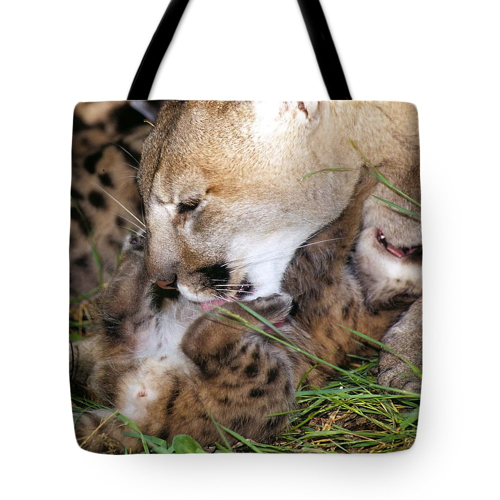 Cougar Tote Bag featuring the photograph Cougar Mother Licks Kitten by Larry Allan
