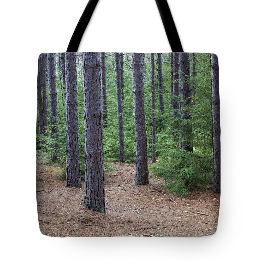 Conifer Tote Bag featuring the photograph Cozy Conifer Forest by John Stephens