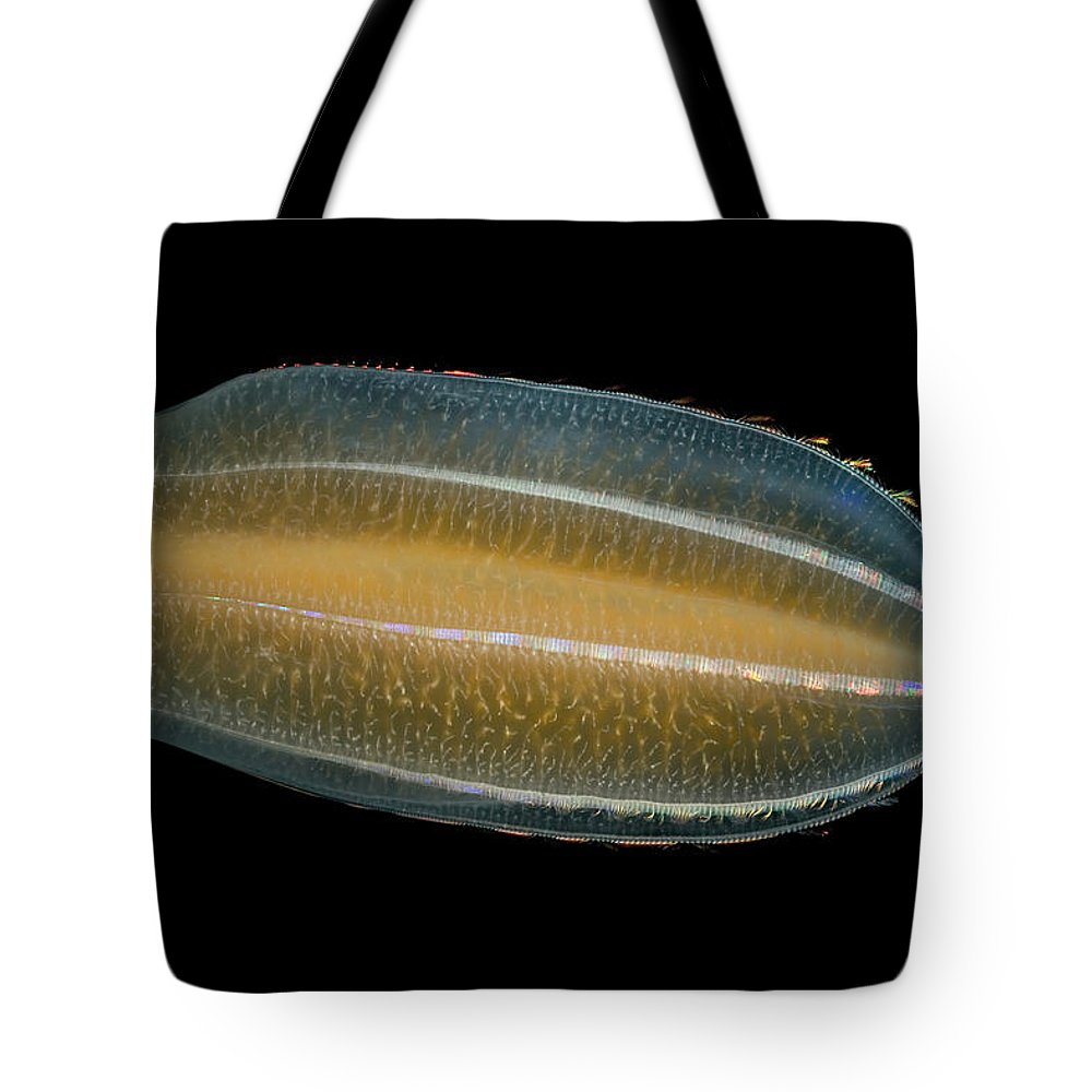 Mp Tote Bag featuring the photograph Ctenophore Beroe Cucumis Showing by Ingo Arndt