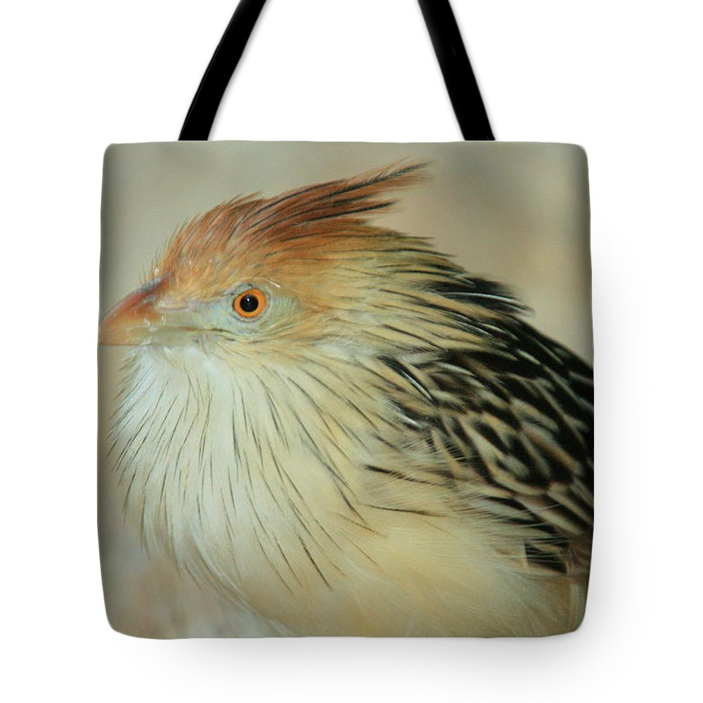 Birds Tote Bag featuring the photograph Cuckoo Bird by Randy Matthews