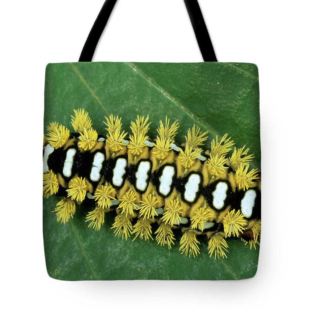 Fn Tote Bag featuring the photograph Cup Moth Limacodidae Caterpillar On Leaf by Ingo Arndt