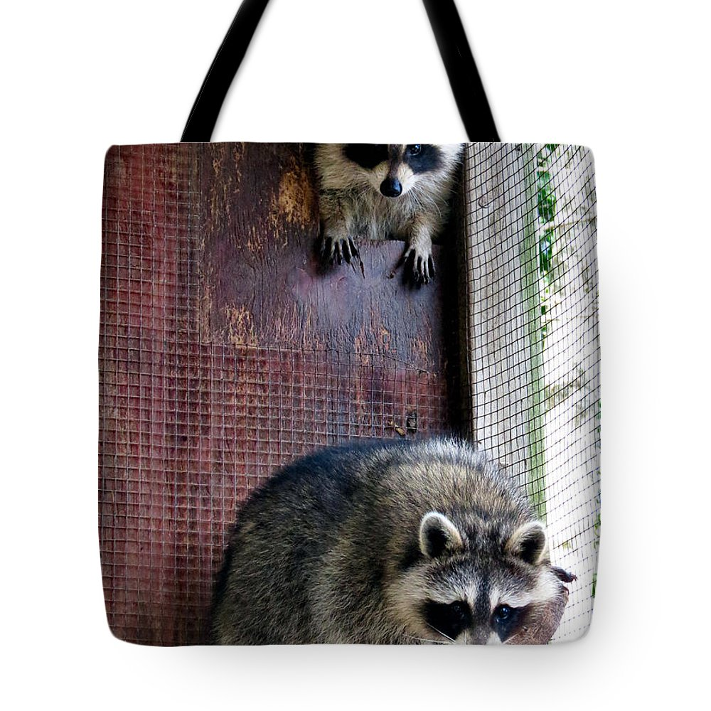 Wildlife Tote Bag featuring the photograph Curious Ones by Art Dingo
