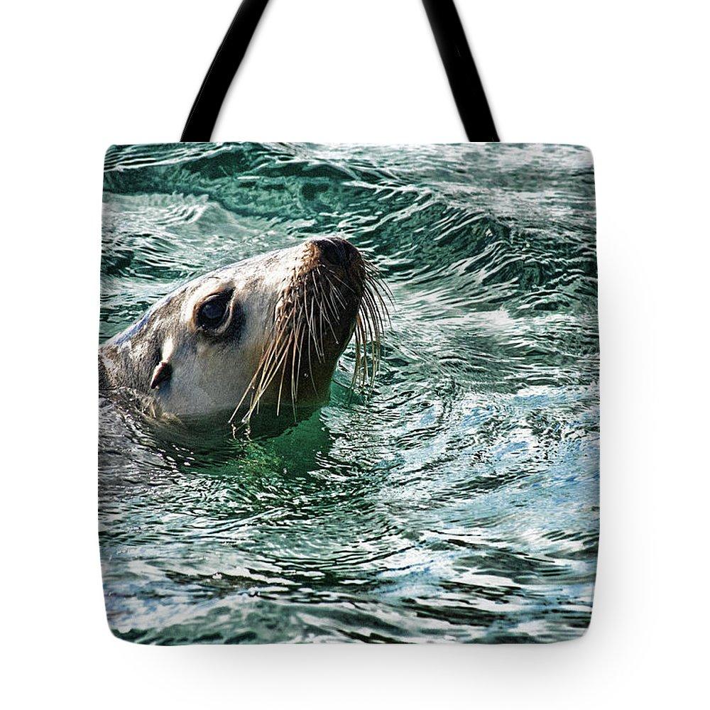 Sea Lion Tote Bag featuring the photograph Curious V4 by Douglas Barnard
