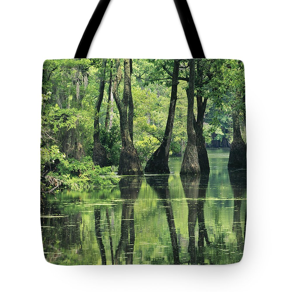North America Tote Bag featuring the photograph Cypress Trees Cross A Waterway by Medford Taylor