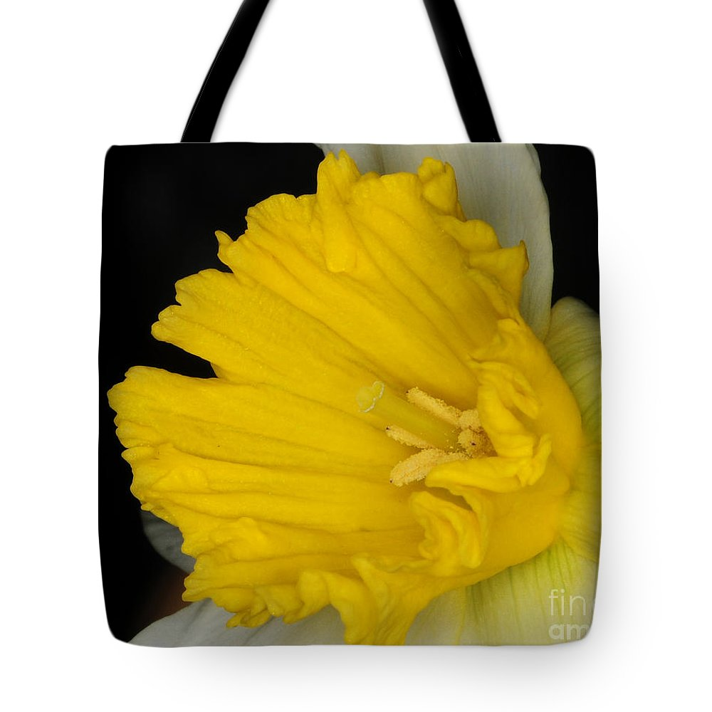 Daffodil Tote Bag featuring the photograph Daffodil On Black by Paul Ward