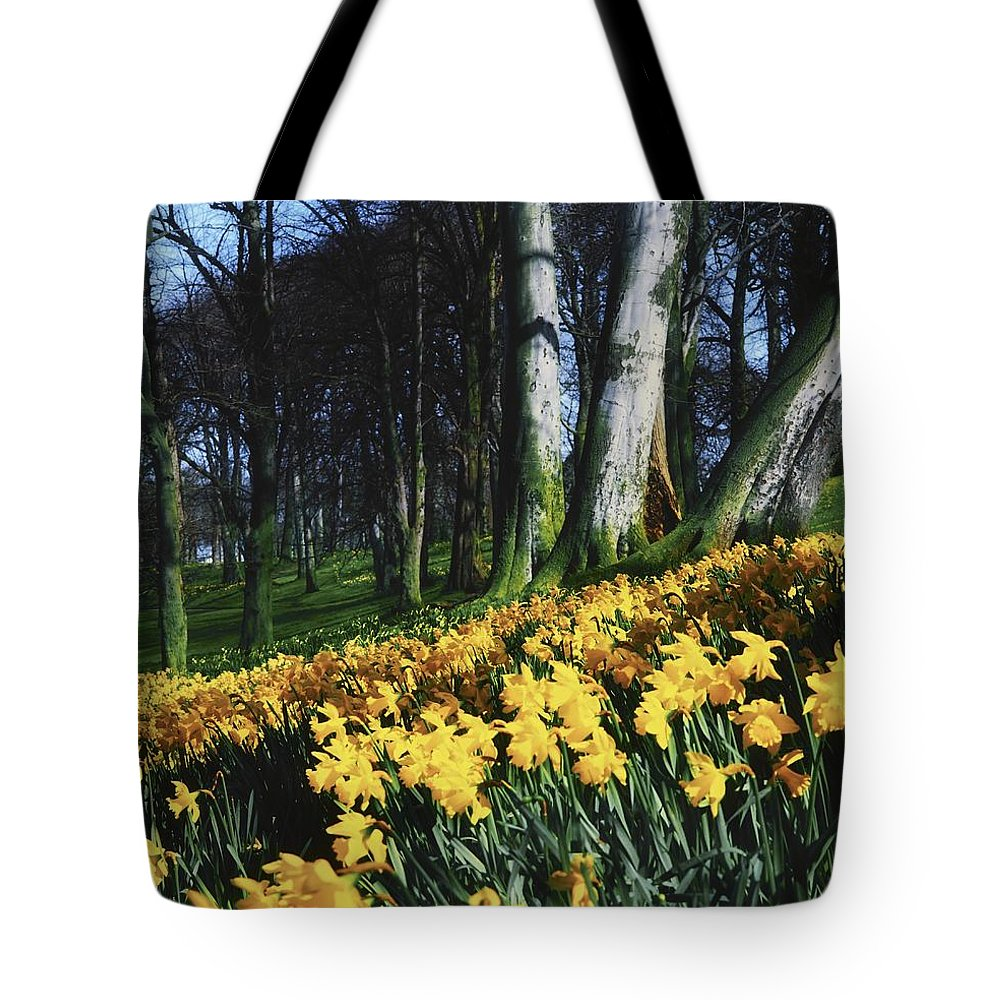 Day Tote Bag featuring the photograph Daffodils Narcissus Flowers In A Forest by The Irish Image Collection