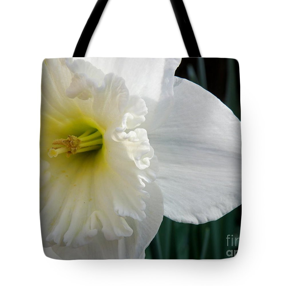 Daffodil Tote Bag featuring the photograph Daffy-down-dilly by Lainie Wrightson