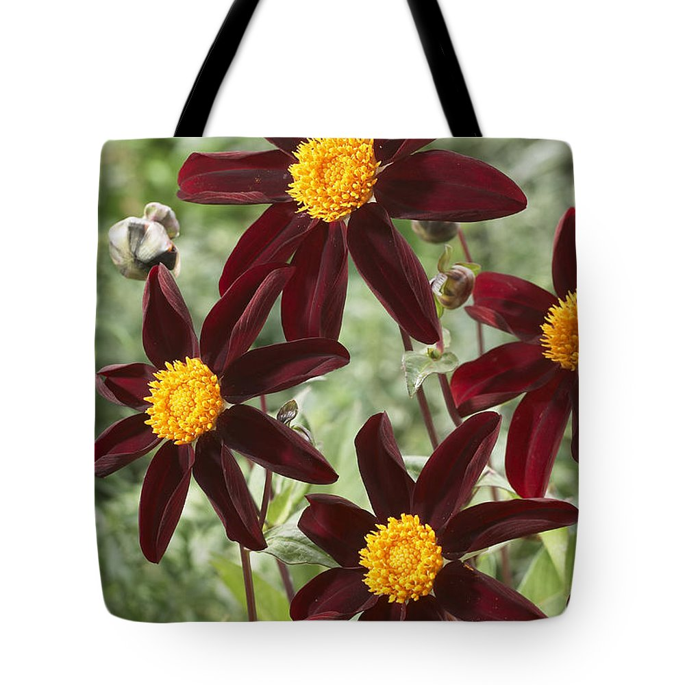 Vp Tote Bag featuring the photograph Dahlia Dahlia Sp Honka Black Variety by VisionsPictures