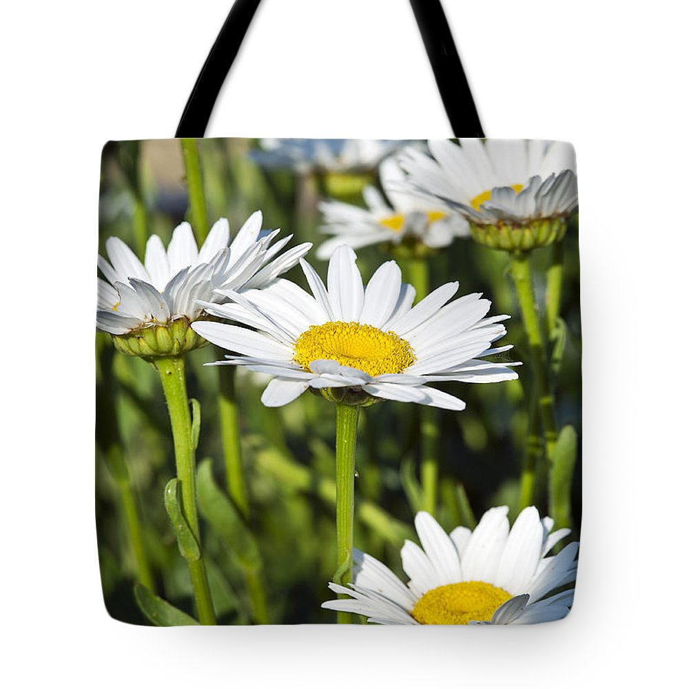 Bellis Perennis Tote Bag featuring the photograph Daisies by John Greim