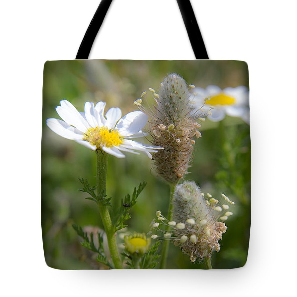 Aromatherapy Tote Bag featuring the photograph Daisies by Michael Goyberg
