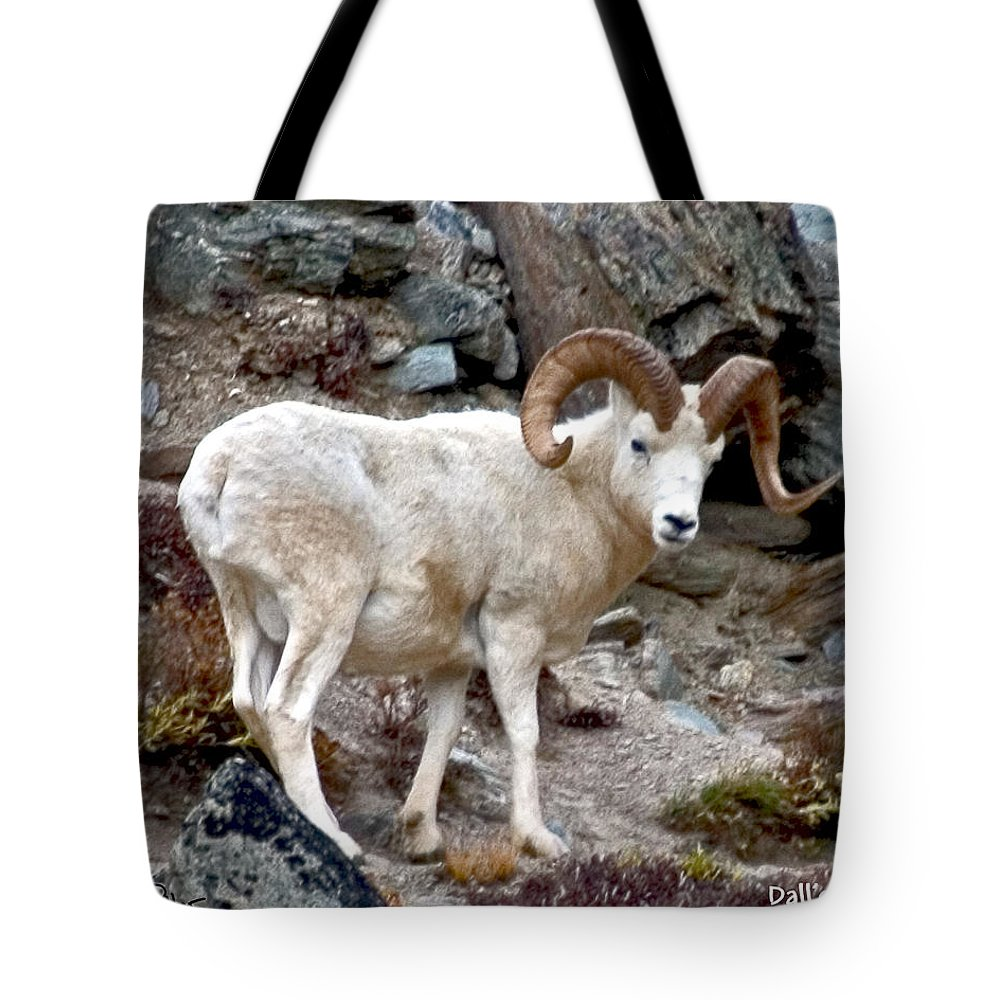Nature Tote Bag featuring the photograph Dall's Sheep by David Salter