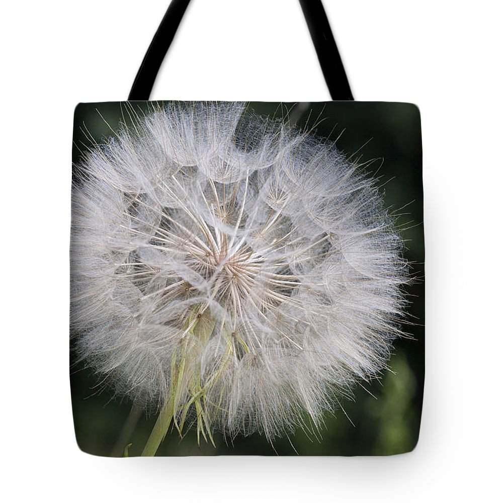 Mp Tote Bag featuring the photograph Dandelion Taraxacum Officinale Seed by Matthias Breiter