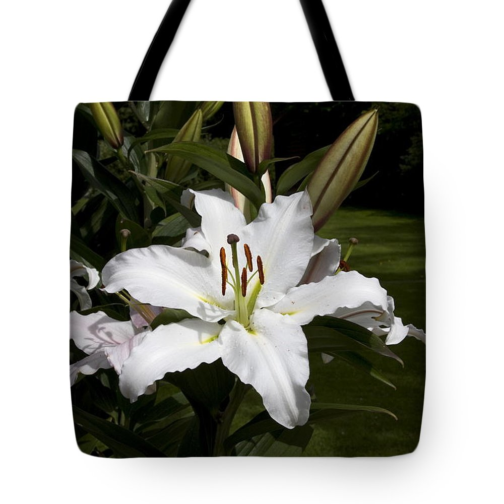 White Day Lily Tote Bag featuring the photograph Day Lily by Sally Weigand