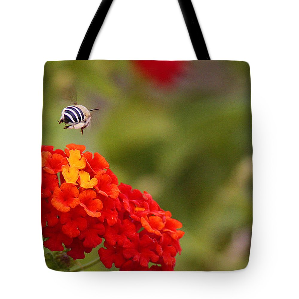Roena King Tote Bag featuring the photograph Deciding Where To Land by Roena King