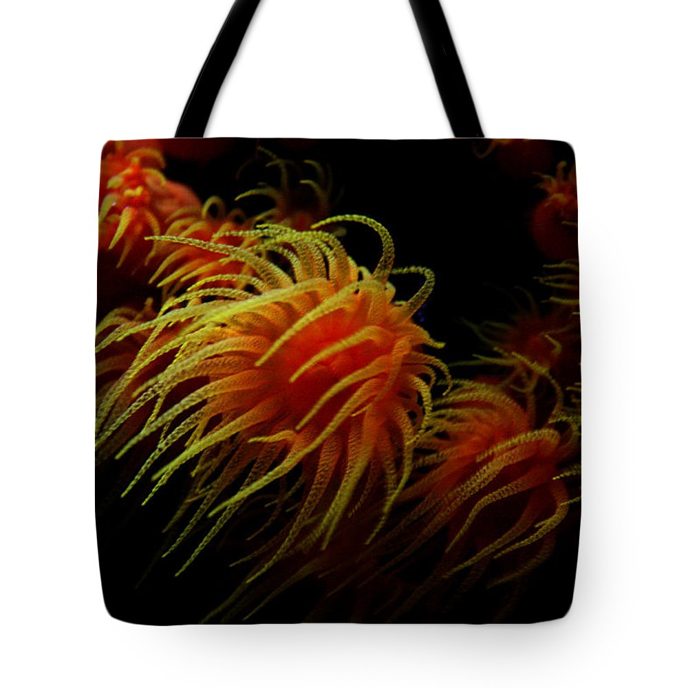 Jennifer Bright Art Tote Bag featuring the photograph Deep Ocean Coral Polyp by Jennifer Bright