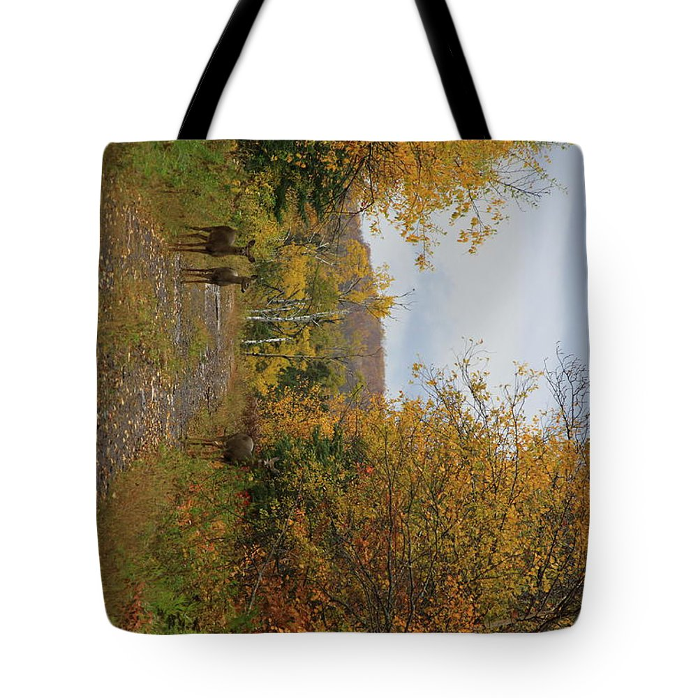 Tote Bag featuring the photograph Deer In Fall by Joi Electa