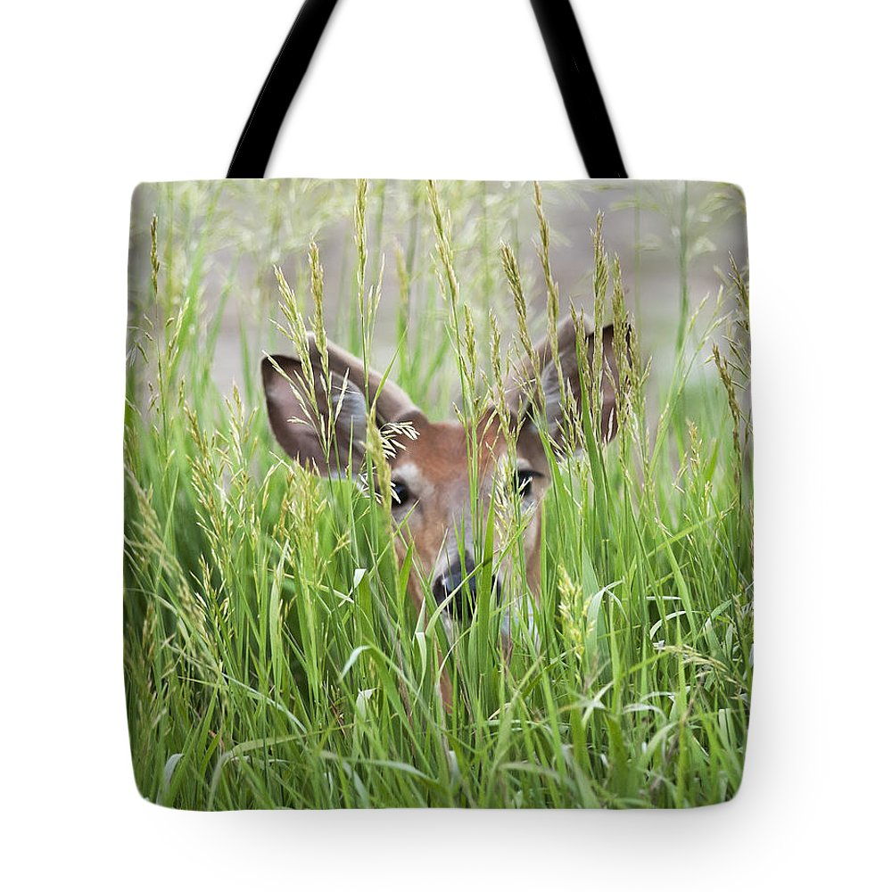 Deer Tote Bag featuring the photograph Deer In Hiding by Art Whitton