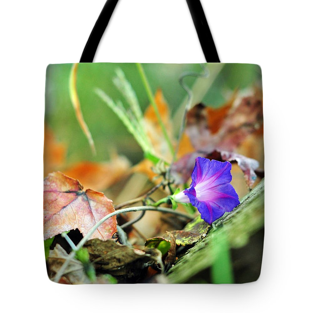 Morning Glory Tote Bag featuring the photograph Delight In Disorder by Rebecca Sherman