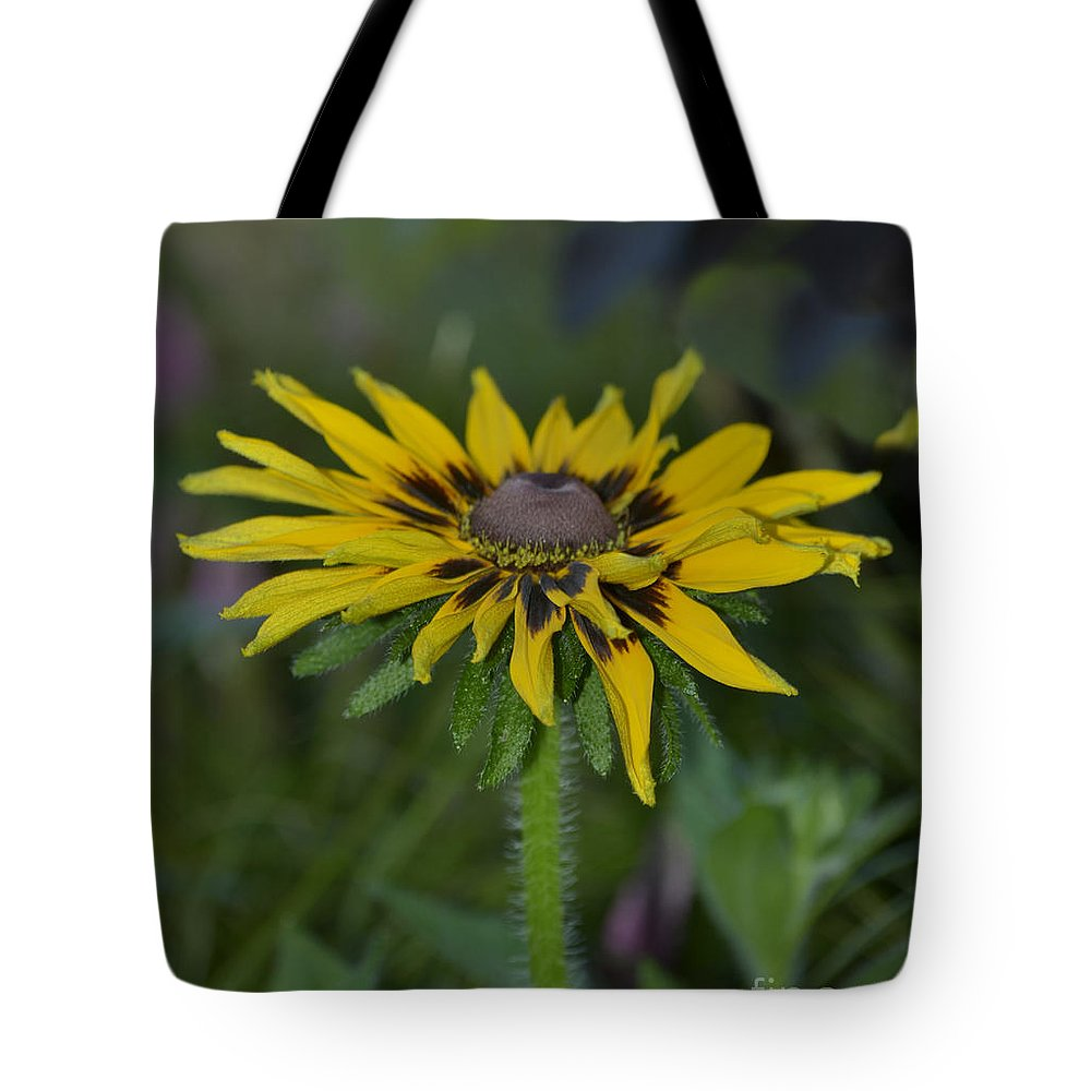 Flower Tote Bag featuring the photograph Denver Daisy 2 by Donna Brown