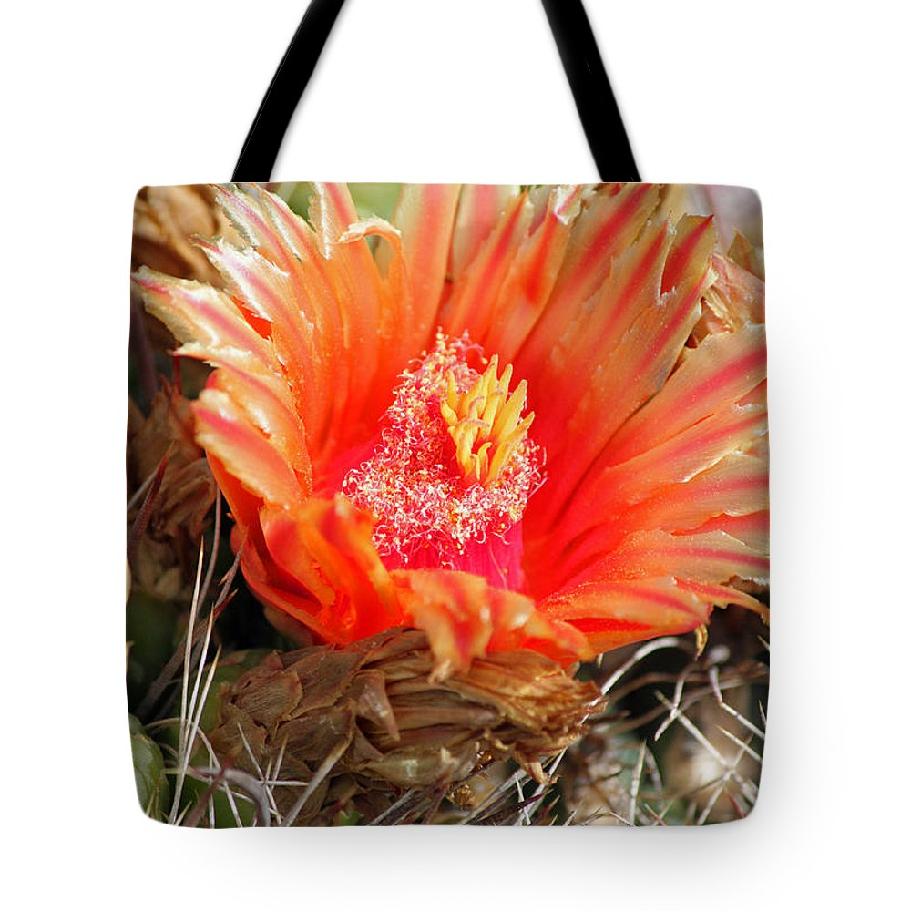Cactus Tote Bag featuring the photograph Desert Beauty by Suzanne Gaff