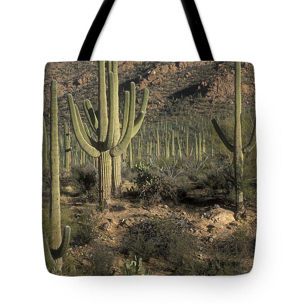 Sandra Bronstein Tote Bag featuring the photograph Desert Guardians by Sandra Bronstein