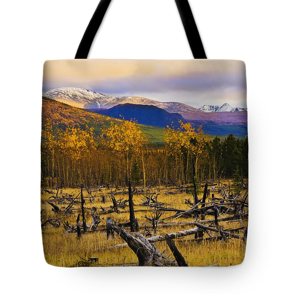Bare Tote Bag featuring the photograph Destruction And Re-growth After Forest by Yves Marcoux