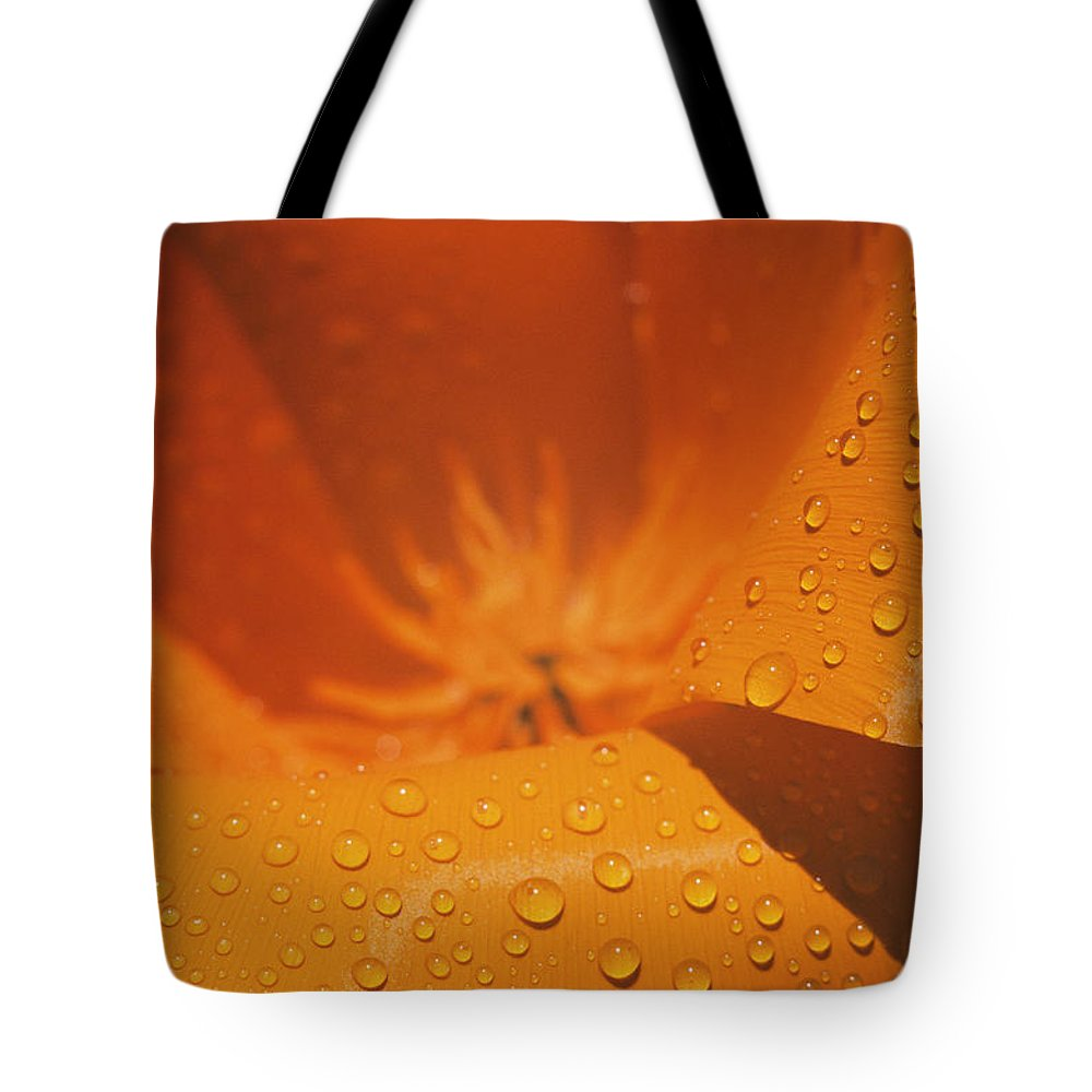 united States Tote Bag featuring the photograph Dewdrops On A Flower by Marc Moritsch