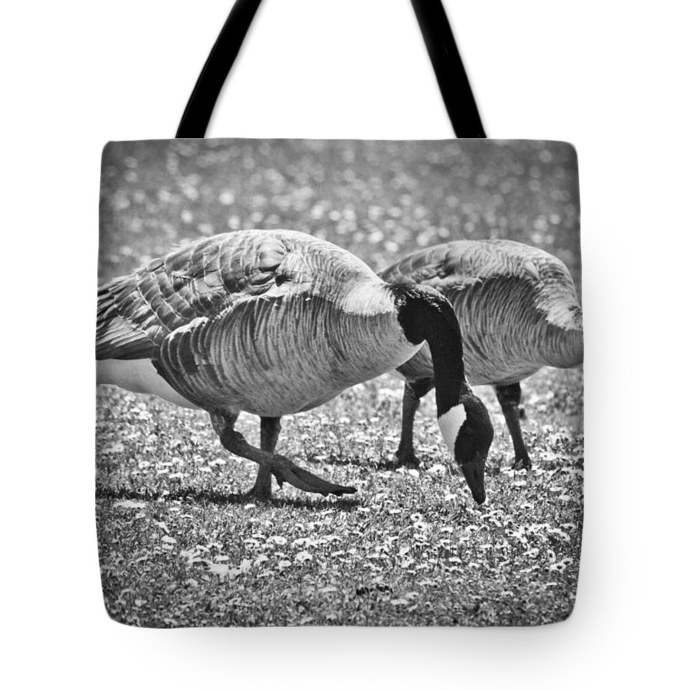 Tote Bag featuring the photograph Dining On Daisies by Priya Ghose