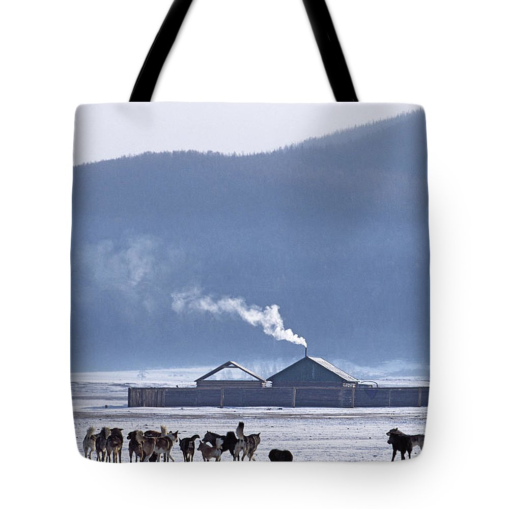 Darhad Valley Tote Bag featuring the photograph Dogs Play Outside In Rinchenlhumbe by Gordon Wiltsie