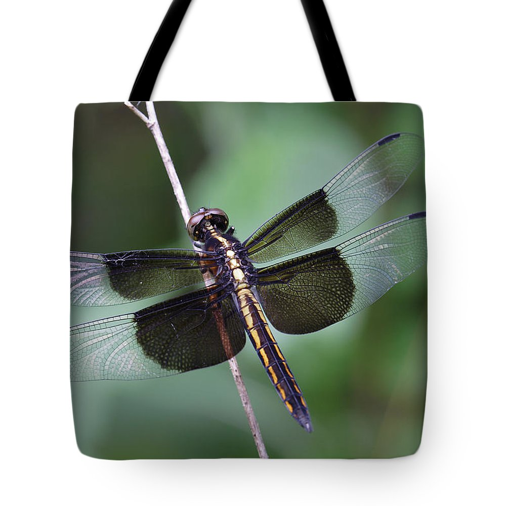 Insect Tote Bag featuring the photograph Dragonfly by Daniel Reed
