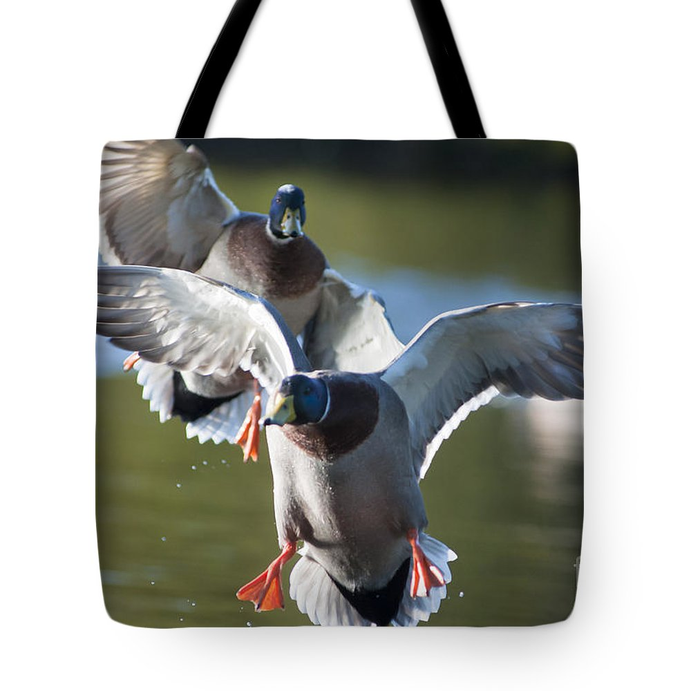 Air Tote Bag featuring the photograph Dramatic Ducks by Andrew Michael