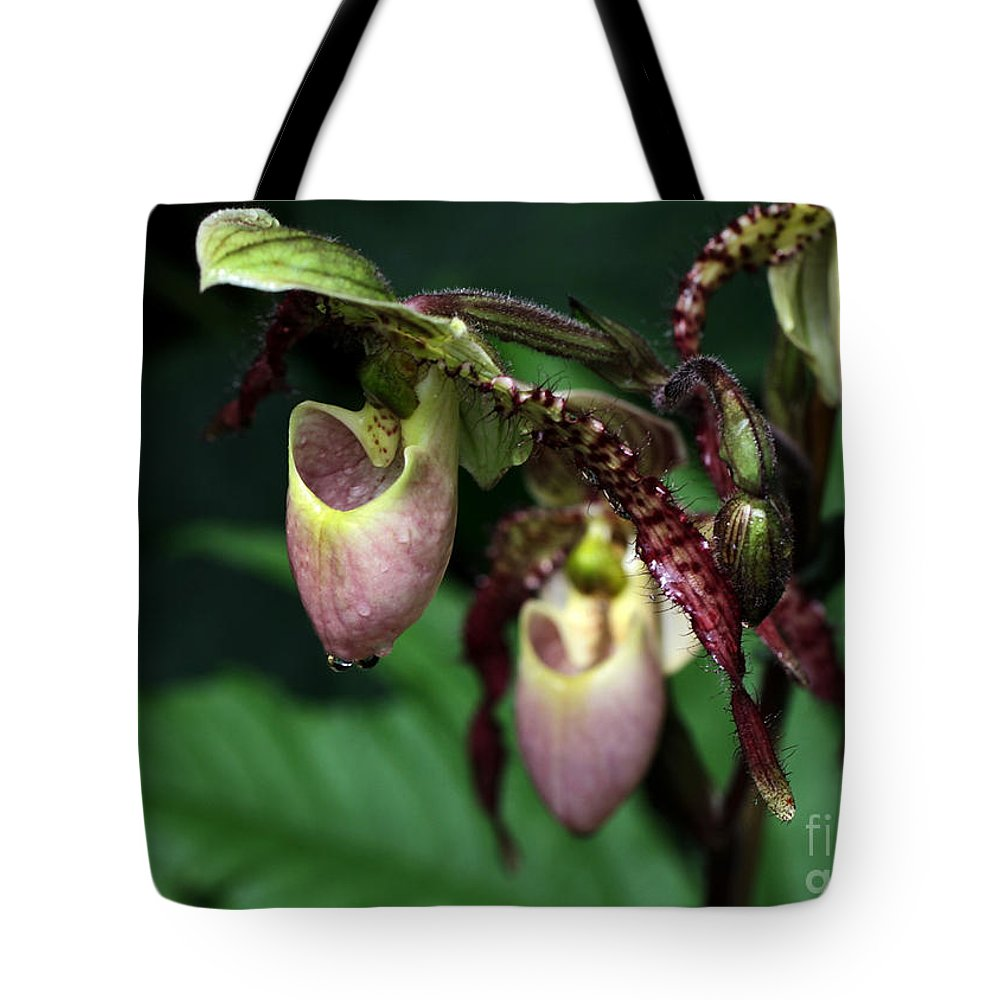Landscape Tote Bag featuring the photograph Drippy Lady Slipper Orchids by Sabrina L Ryan