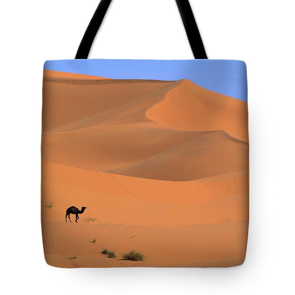 Mp Tote Bag featuring the photograph Dromedary Camelus Dromedarius Camel by Cyril Ruoso