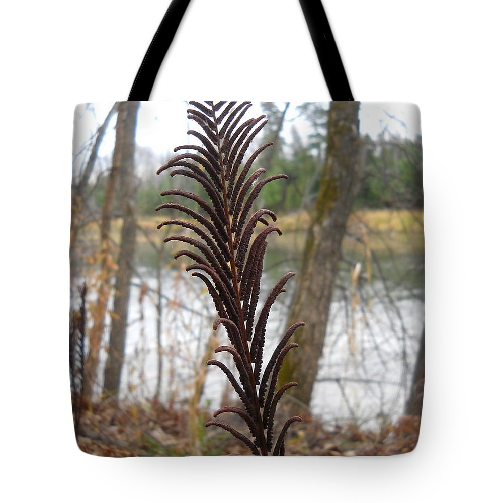 Fern Tote Bag featuring the photograph Dry Fern Stem In November by Kent Lorentzen