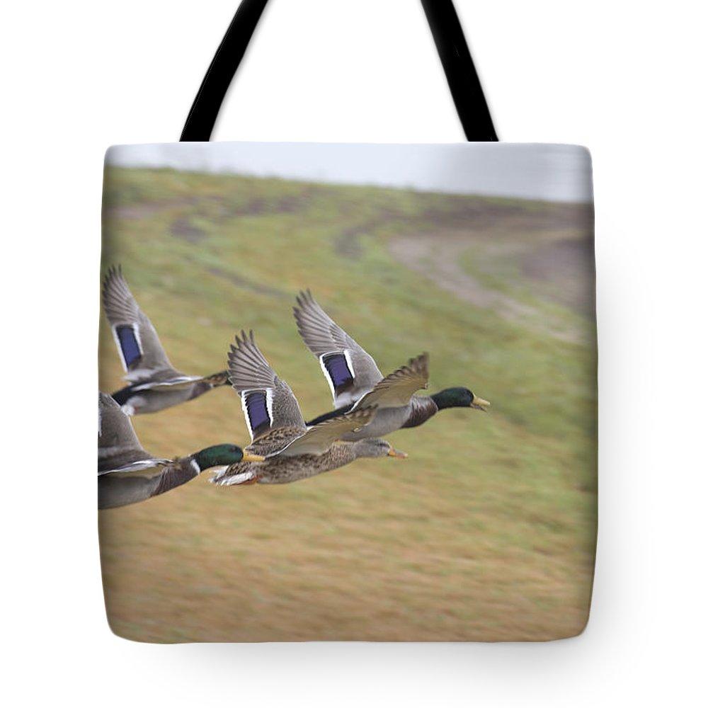 Ducks In Flight Tote Bag featuring the photograph Ducks In Flight V3 by Douglas Barnard