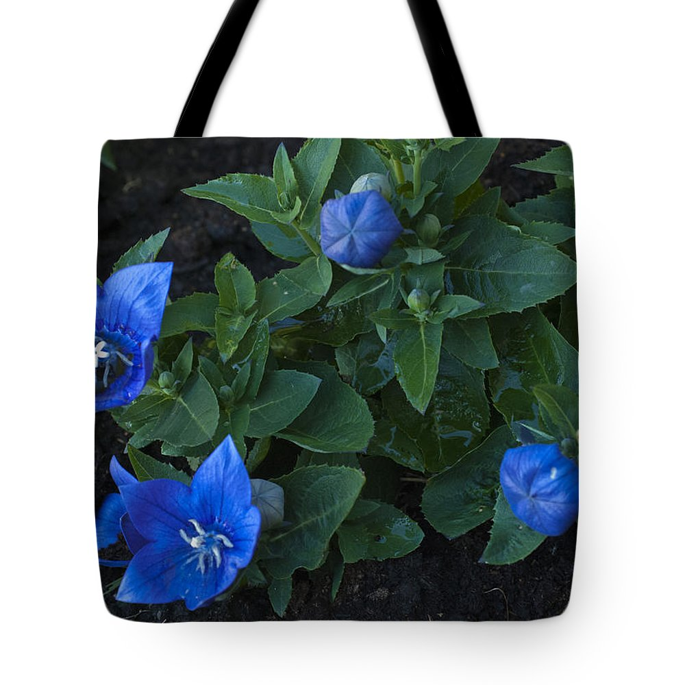 Dwarf Balloon Flower Platycodon Astra Blue 2 Tote Bag For Sale By