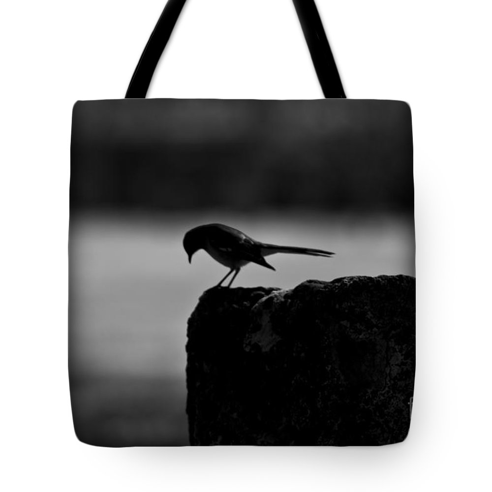 Birds Tote Bag featuring the photograph Early Bird by Kim Henderson