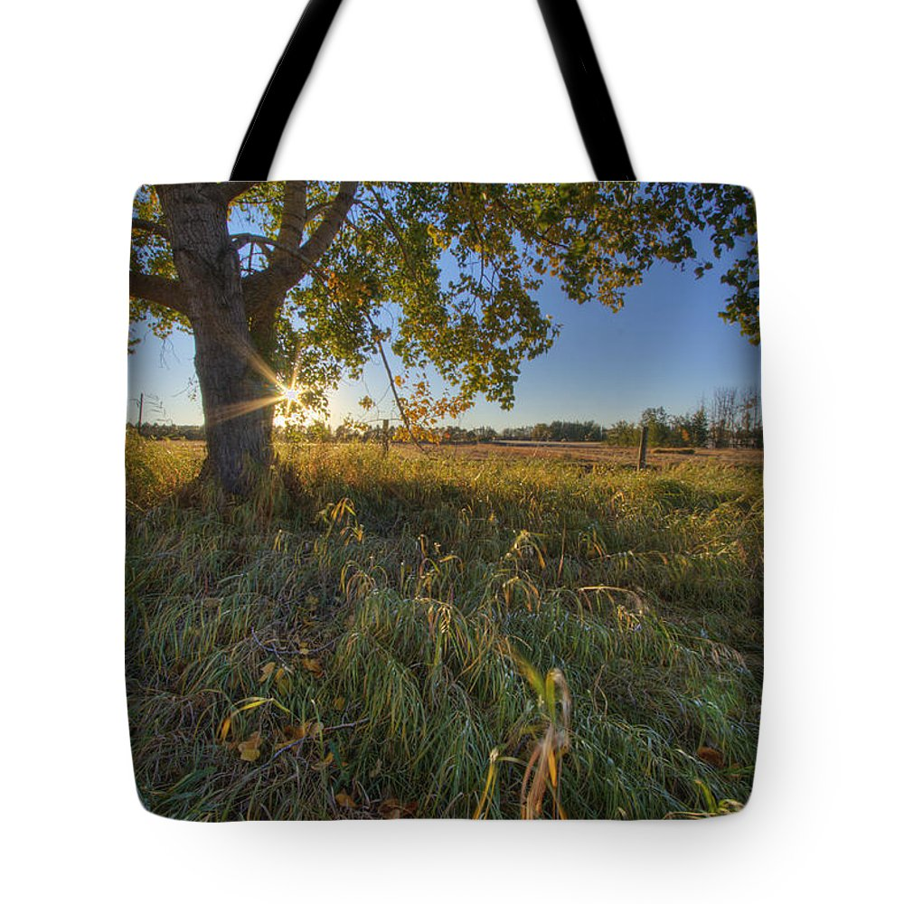 Colour Image Tote Bag featuring the photograph Early Evening Under An Old Poplar Tree by Dan Jurak