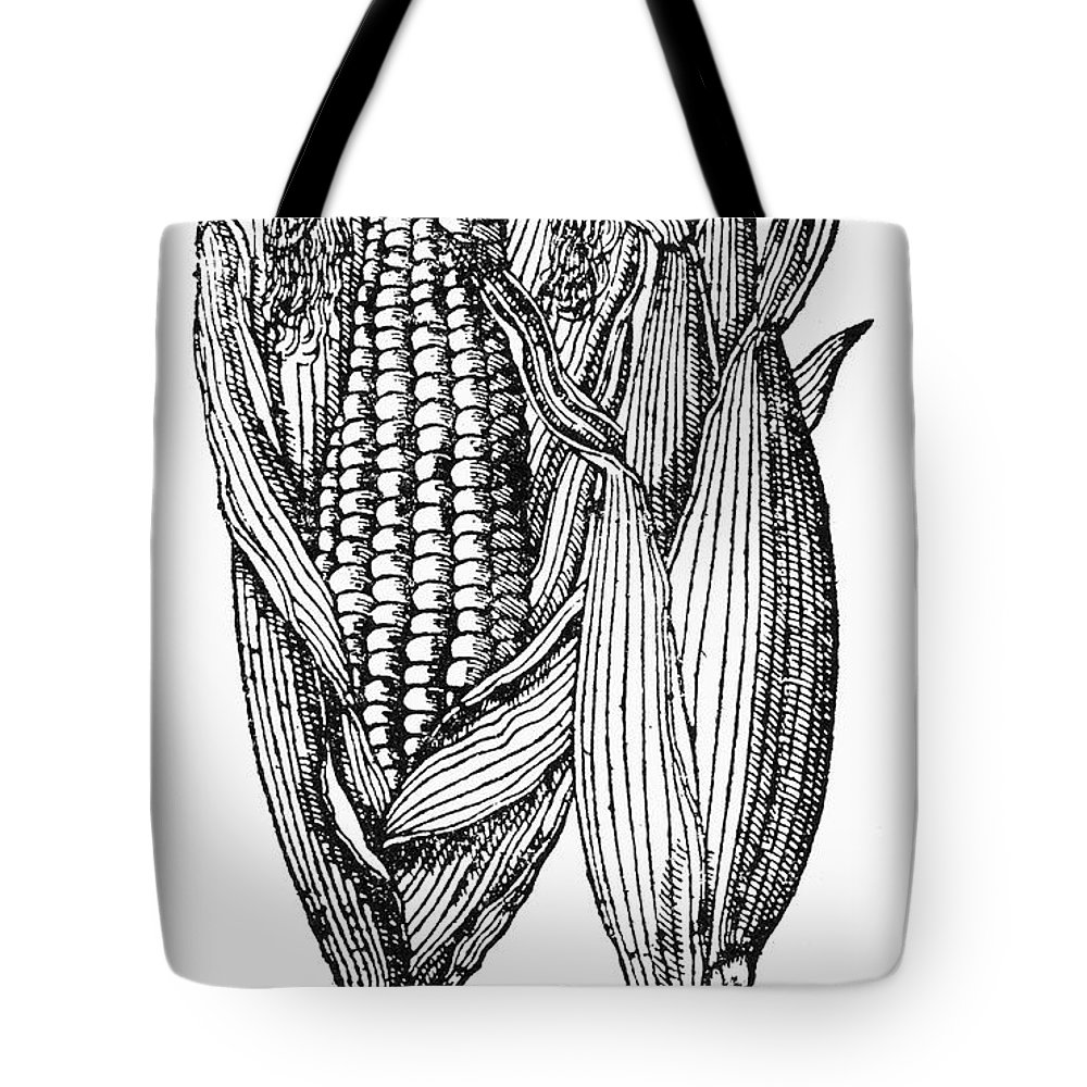 19th Century Tote Bag featuring the photograph Ears Of Maize by Granger