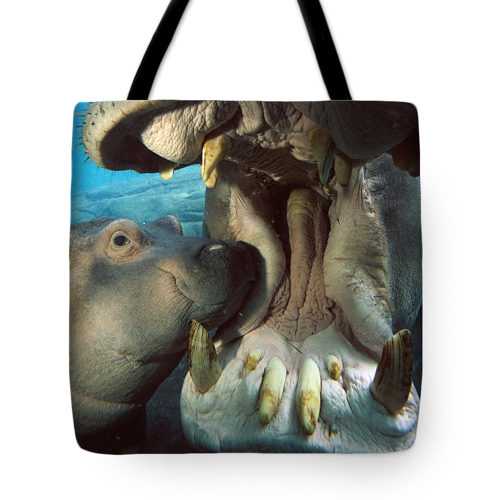 Affection Tote Bag featuring the photograph East African River Hippopotamus by San Diego Zoo