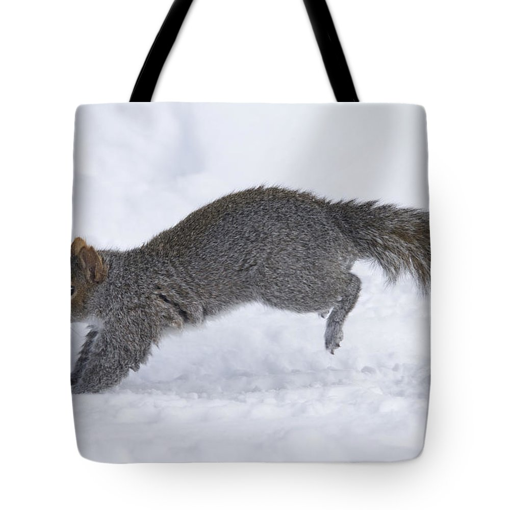 Alertness Tote Bag featuring the photograph Eastern Gray Squirrel Running by Philippe Henry