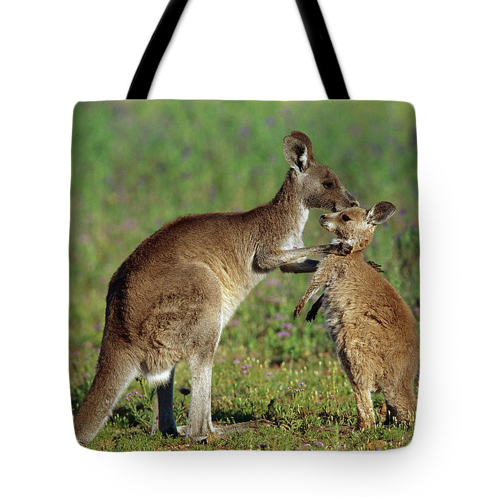 Mp Tote Bag featuring the photograph Eastern Grey Kangaroo Macropus by Cyril Ruoso